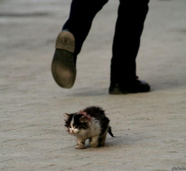 Boy cat bullying girl cat