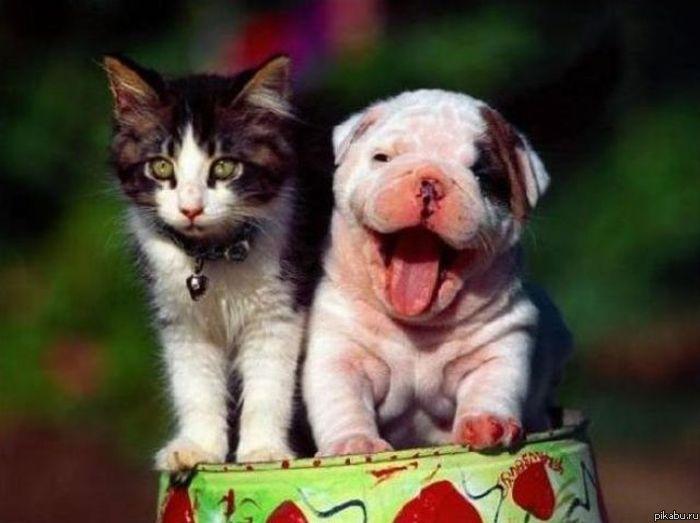 cats  pets