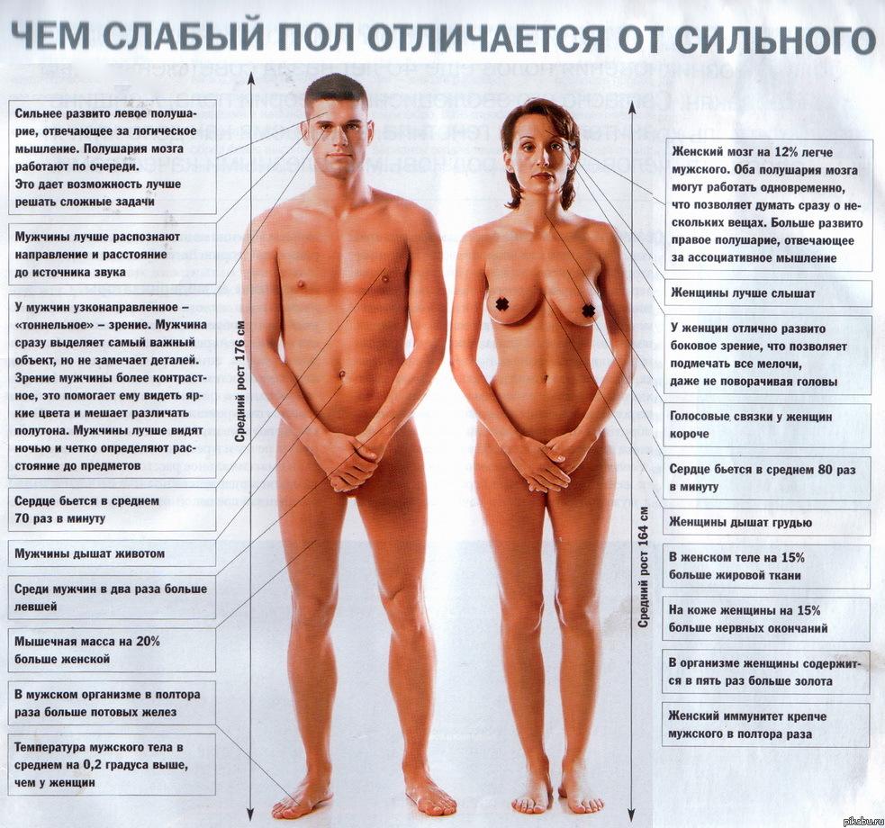 внешние признаки женской сексуальности