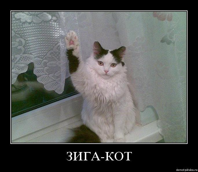 Зига от кота