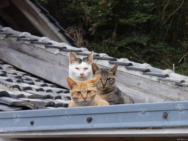 What is a group of house cats called