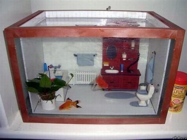 Как сделать рыбок дома 283
