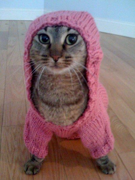 картинки кошки в капюшоне