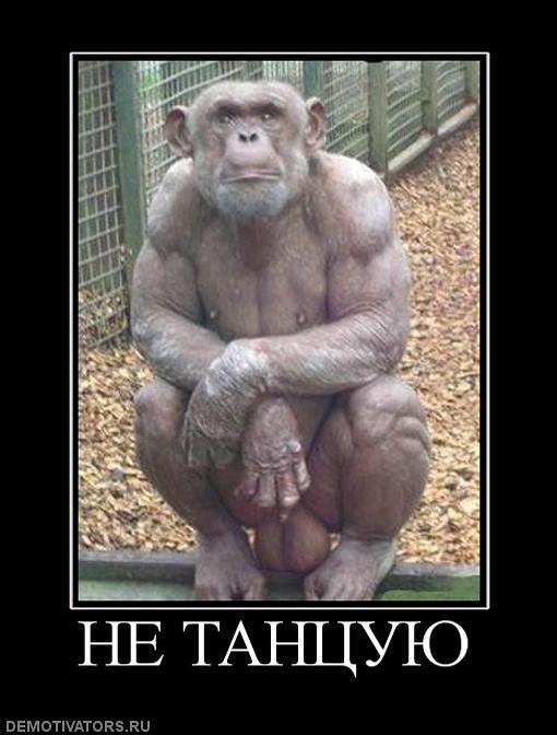 обезьяны фото пошлые