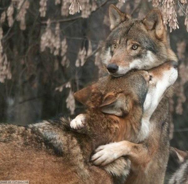 Дакайн отводит у каких животных одна пара на всю жизнь основ…При выборе термобелья