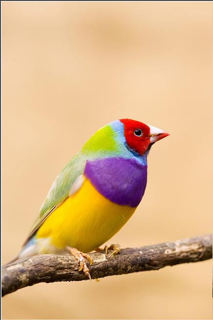 Какая красивая птичка