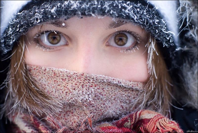 Купить чеснок на посадку под зиму в интернет