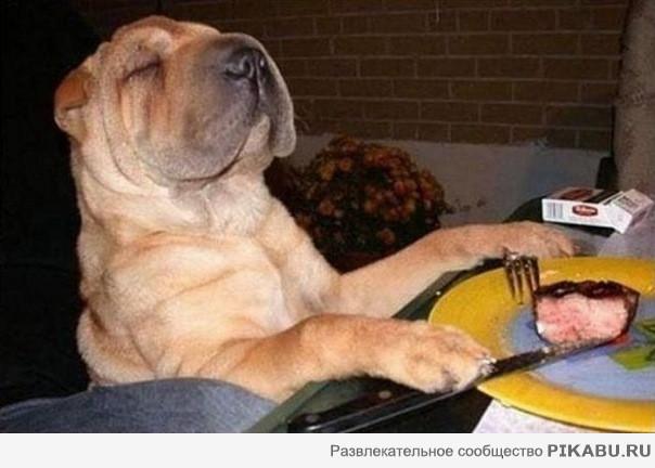 картинки собак которых едят