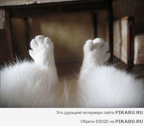 Cat front paw anatomy