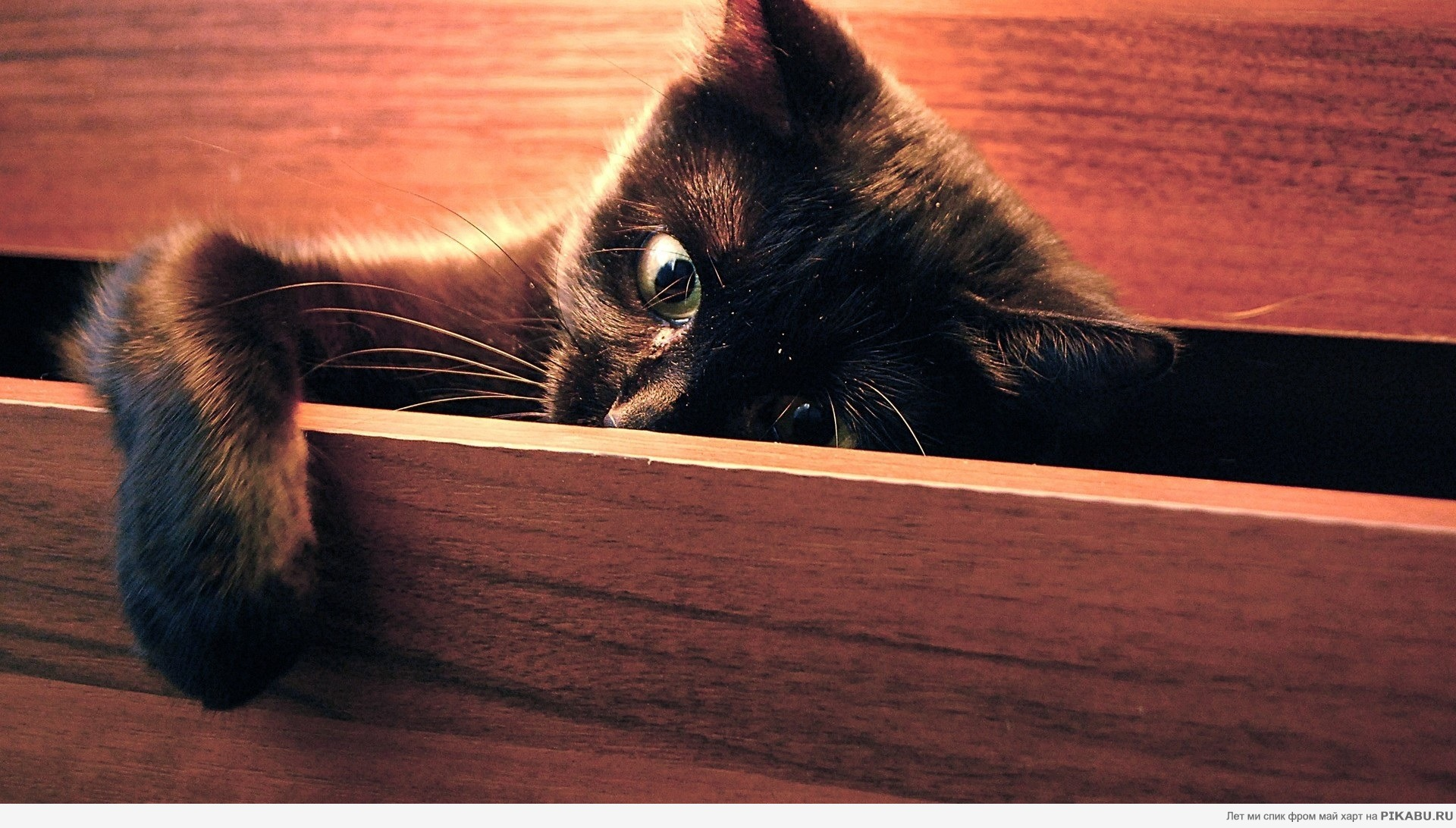Все породы кошек c ФОТО, Ценами, Рейтингом и комментариями.