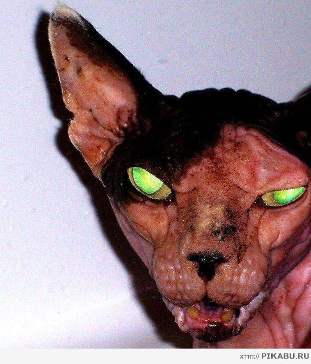 страшно смешные фото котов