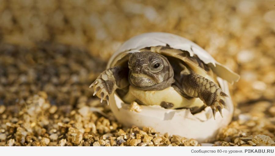 Значение черепахи при гадании