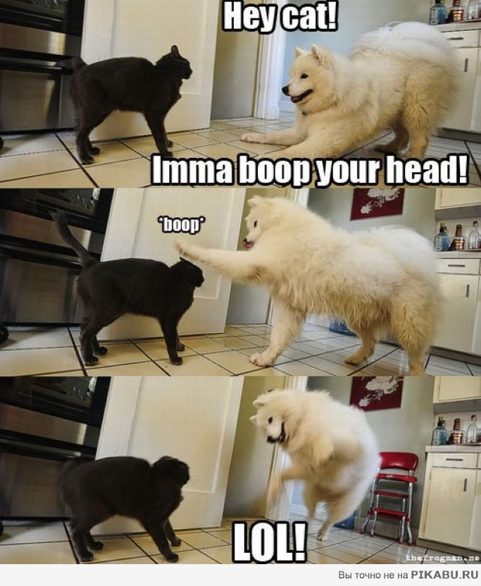 Silly dog and cat pictures