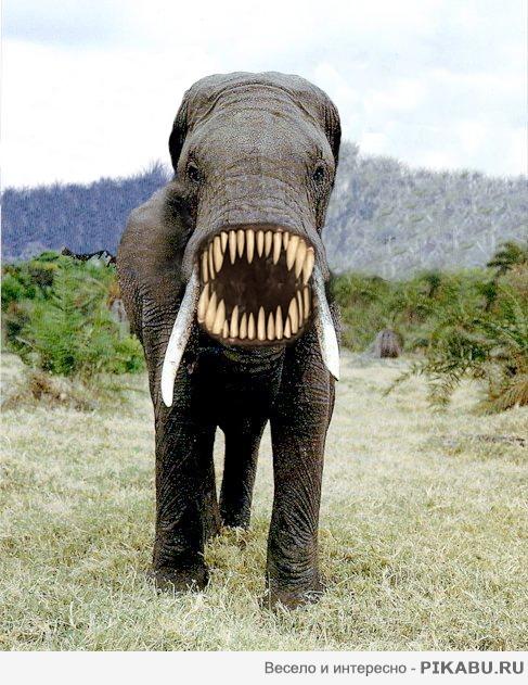 Хуй у слона фото 35-514
