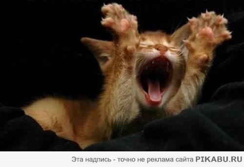 http://apikabu.ru/img_n/2011-08_1/5d23ff.jpg