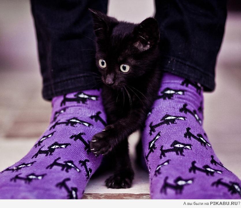 Клевые носочки животные