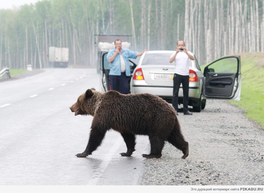 Ходит медведицей что это