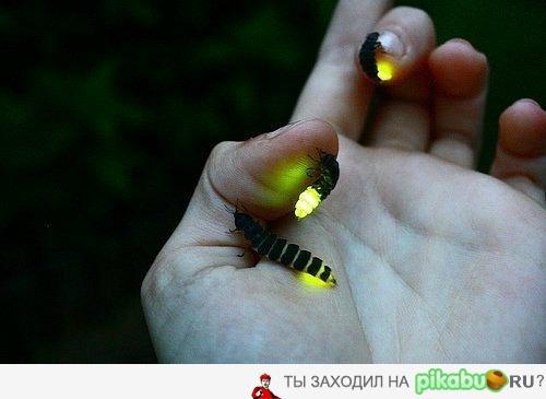 Как самому сделать светлячков