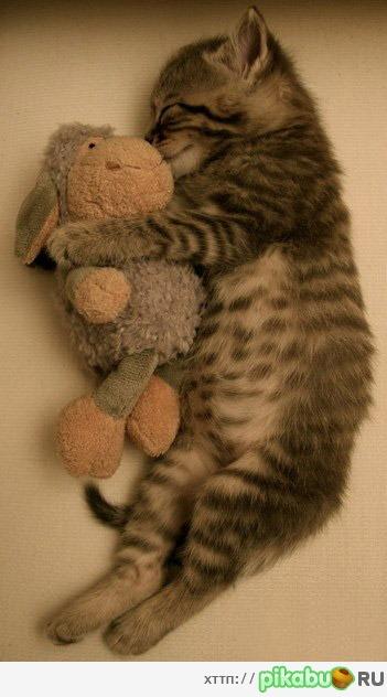 Stuffed animals cats kittens