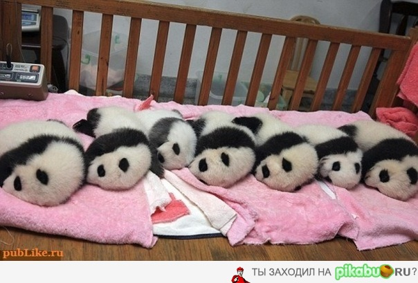 картинки с животными для малышей: