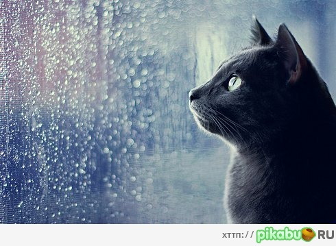 cat in the rain full text Children's poetry pages - the cat in the hat by dr seuss.
