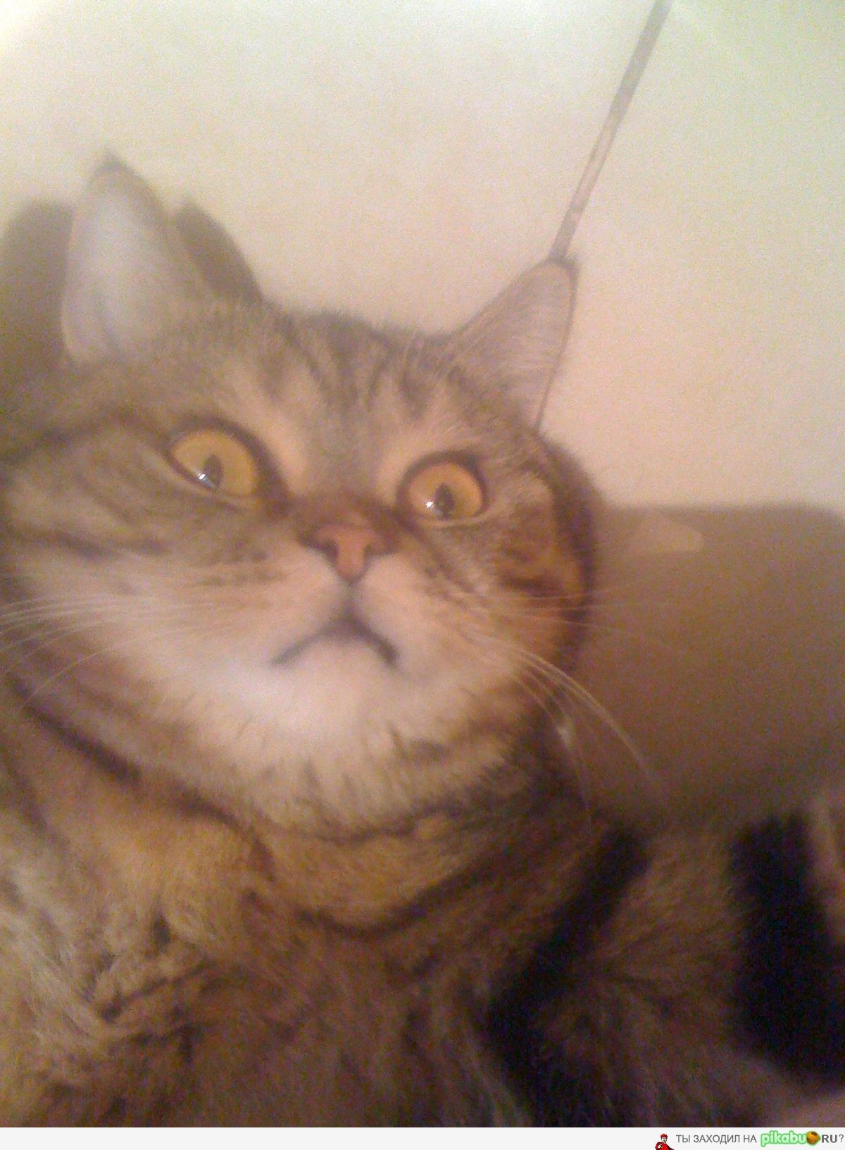 Кот на аватарку фото