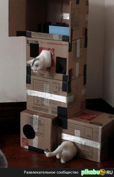 Как сделать для кошки лабиринт