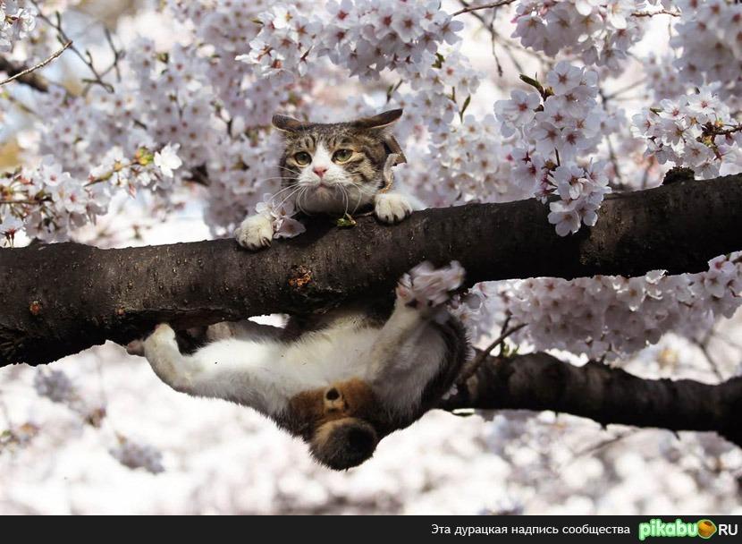 В сне видит цветущий дерева
