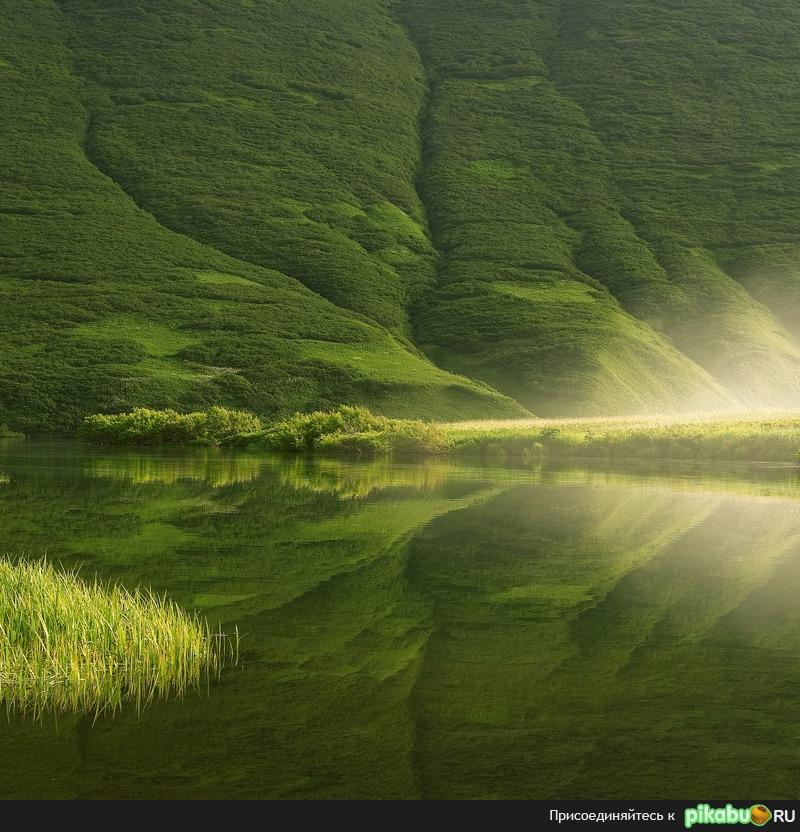 Какое все зеленое... / Мобильная версия Pikabu.