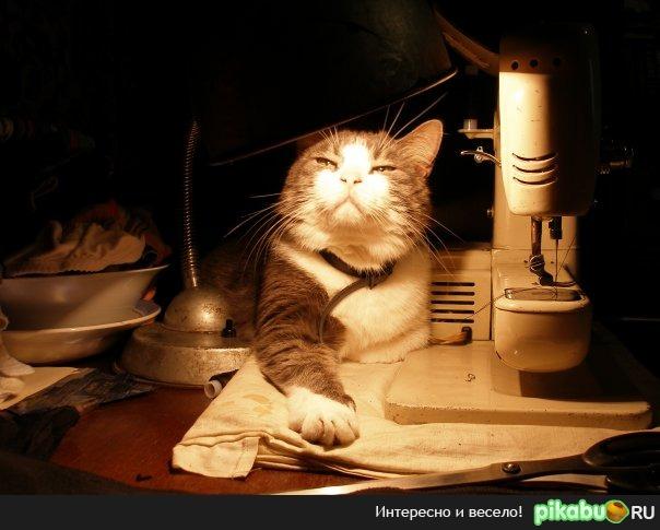 Мой кот Одно из удачных фото моего кота. Кота давно уж нет, а фото греет душу.