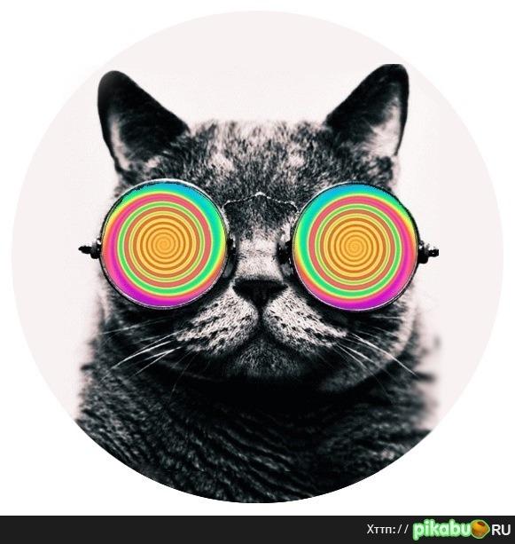 Фото кот в очках на аву в вк