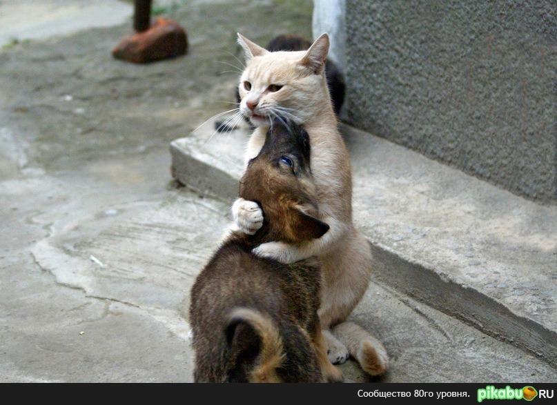 котенок и щенок целуются картинки