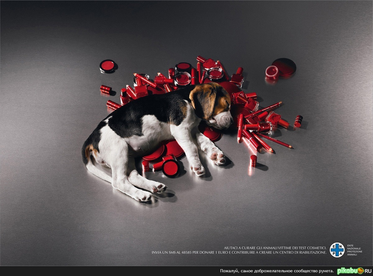 Can simulations replace animal testing? Alas