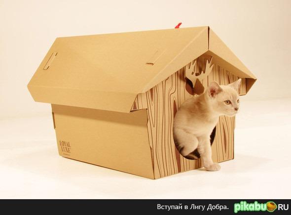 Как сделать дом для кота своими руками из коробки фото