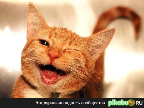 коты смеются картинки