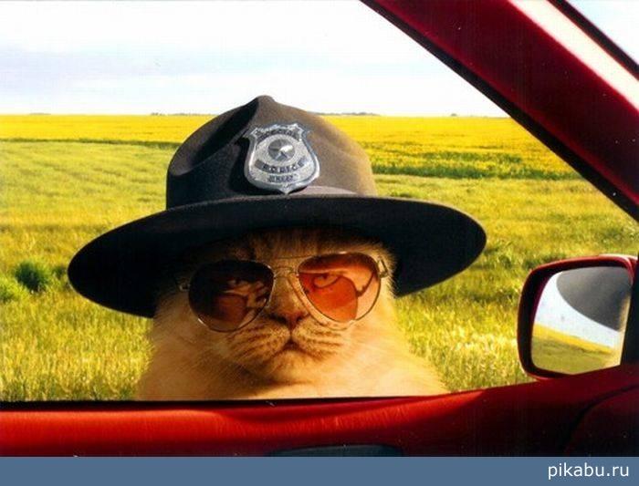 скачать через торрент шериф - фото 7