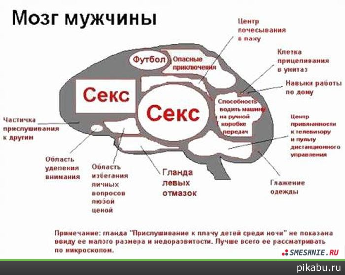 otdel-mozga-otvechayushiy-za-seksualnoe-vozbuzhdenie