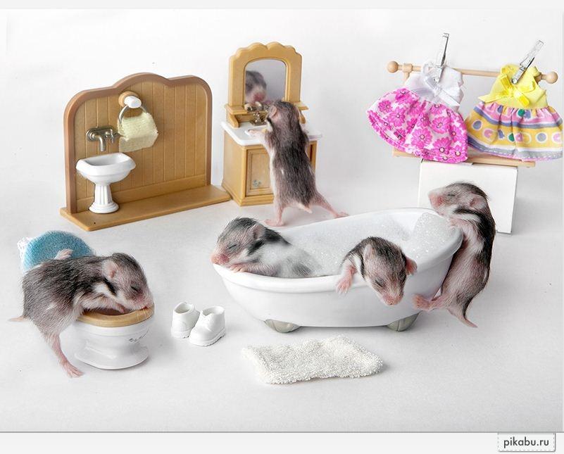 Как сделать животное в домашних условиях