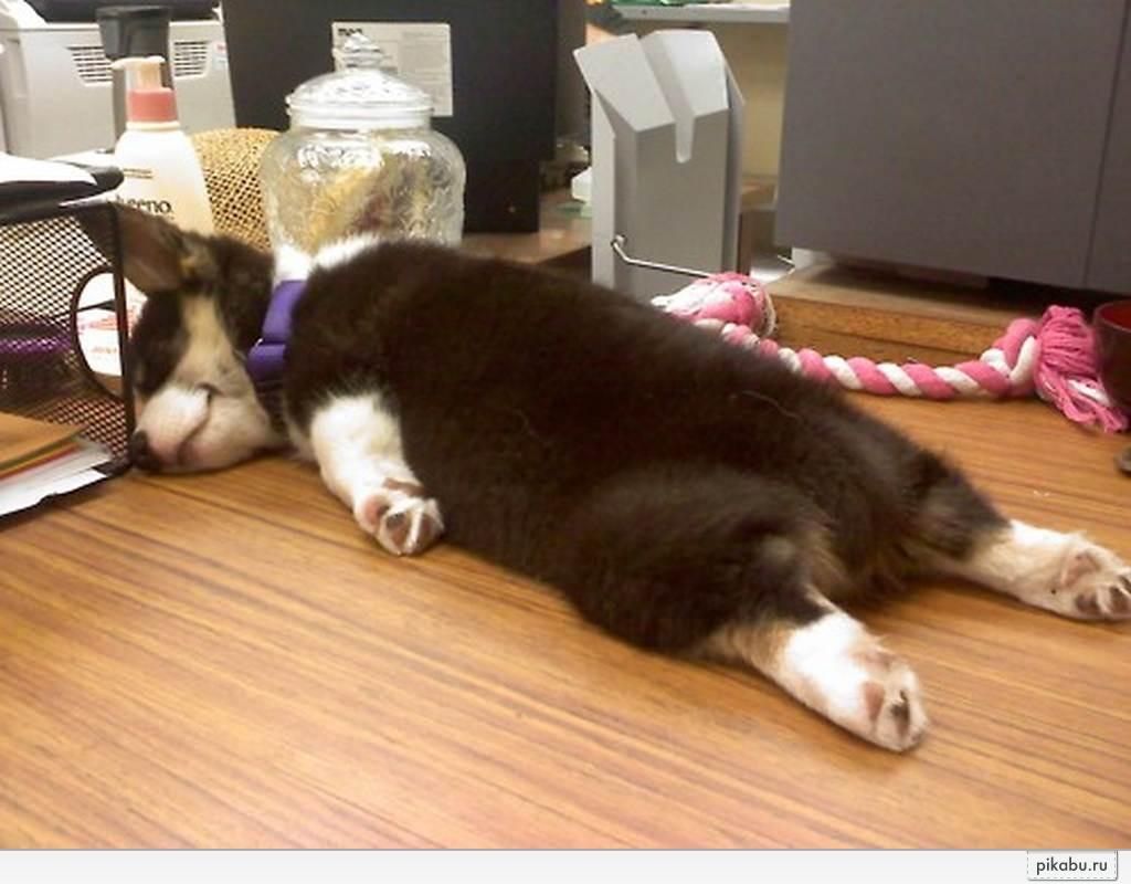 sleepy animals meme - 800×600