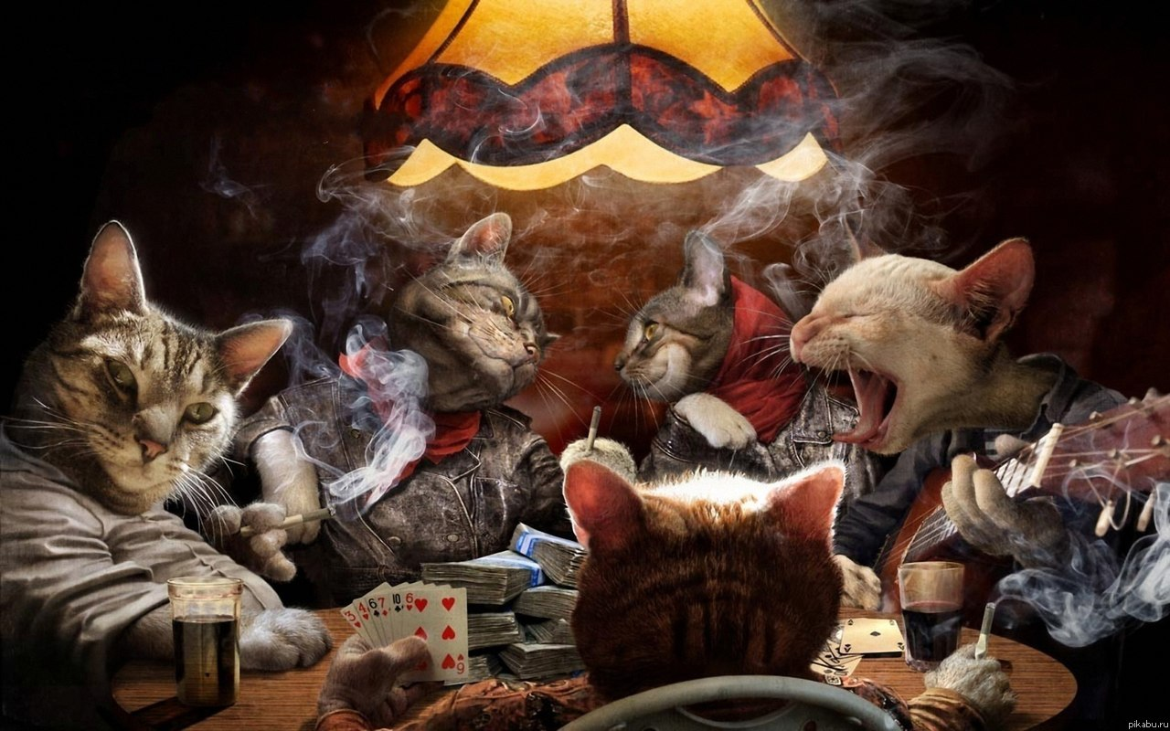 cat and rat games for kids