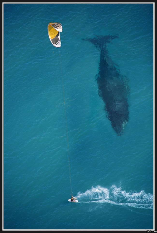 Giant whale under boat