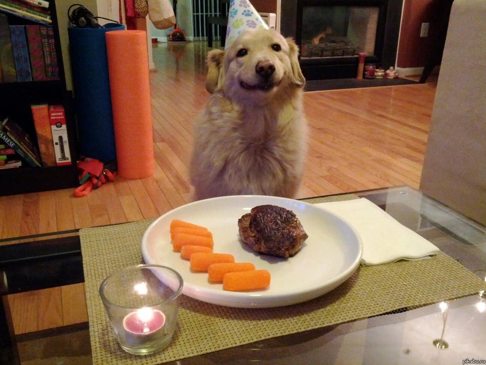 Поздравление любимой собаке с днем рождения