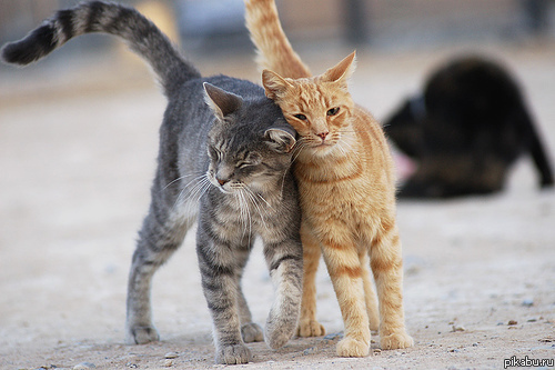 do cats feel their tails