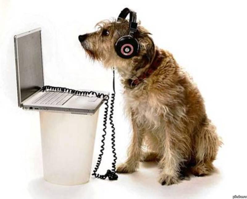 Звуки лай щенка скачать бесплатно