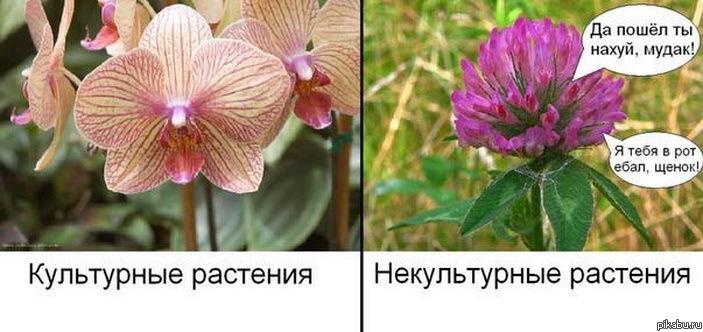 прикольные растения фото