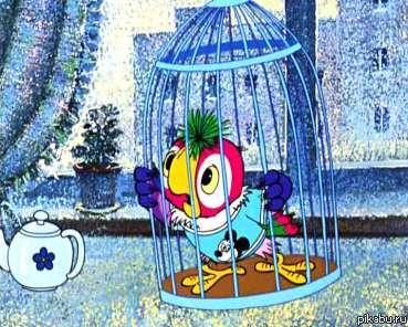 свободу попугаям картинка