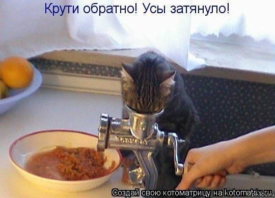 фото шаурмы с котятами #2