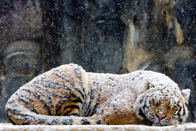 http cats xbubs ru nilufar-gul-foto-skachat html