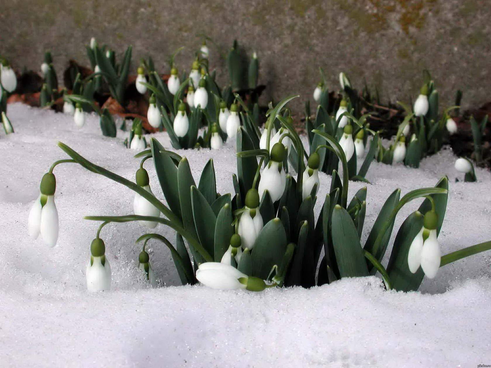 природа весна март фото