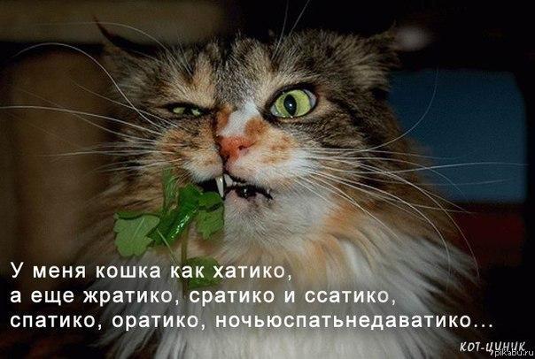 Мой кот хатико